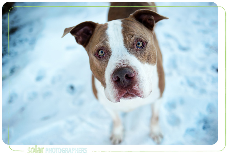 dog portraits at Wayside Waifs in Kansas City, MO