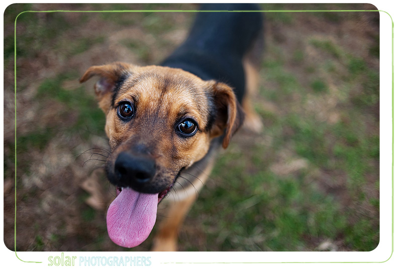 kansas city dog photography at wayside waifs