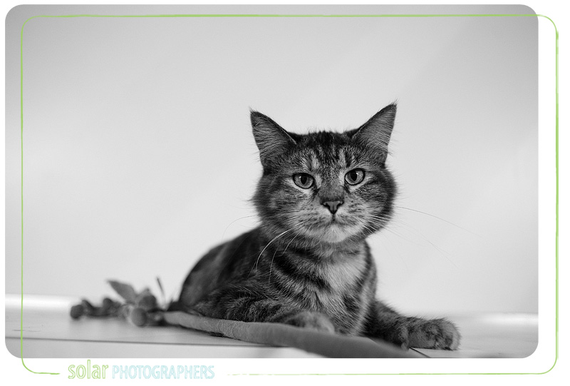 A Cat portrait taken at Wayside Waifs in Kansas City, MO