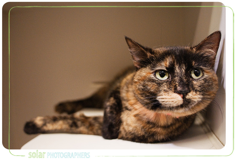 A cat named Luci available for adoption at Wayside Waifs in Kansas City, MO.