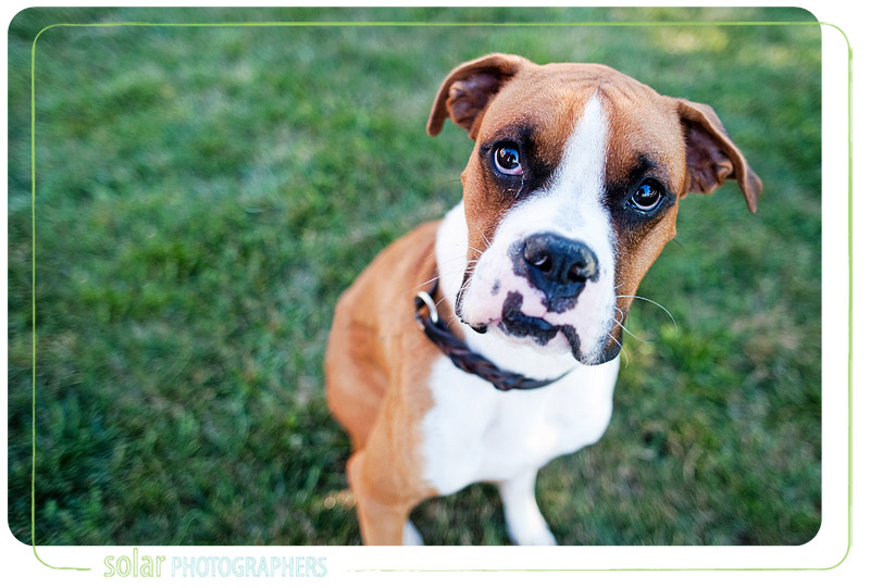 Portrait of a beautiful boxer.