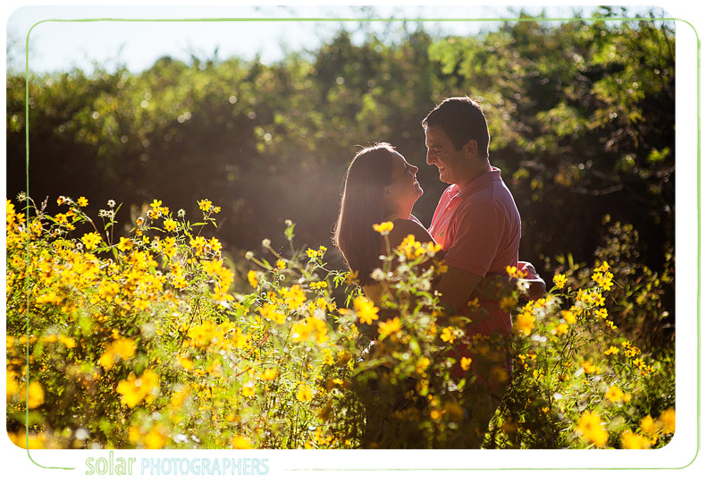Engagement picture taken in a beautiful yellow flower bush.