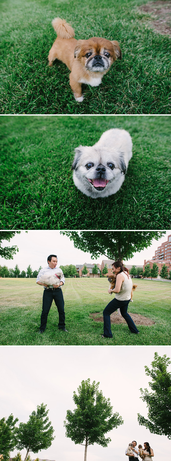 Couple with their cute Pekingese dogs.