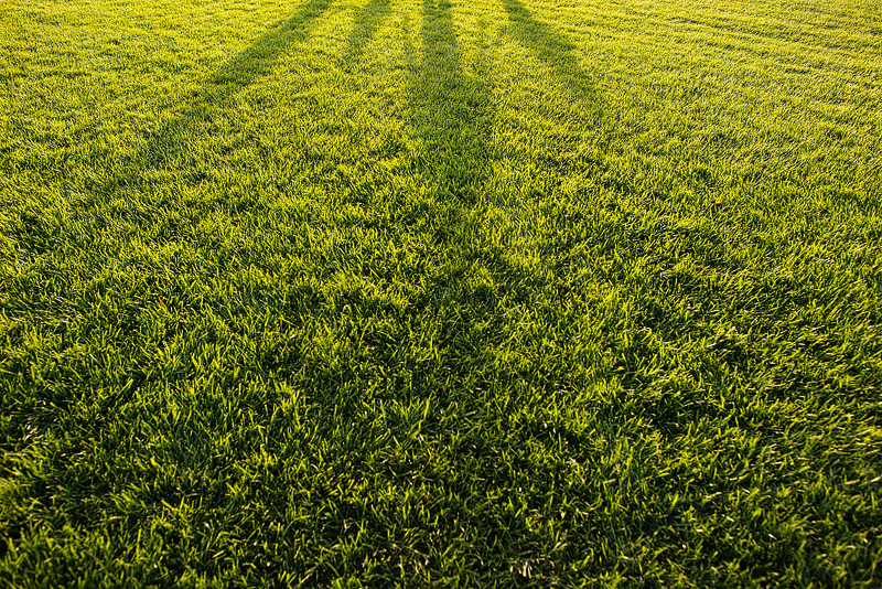 Kansas City photography shadows in grass.
